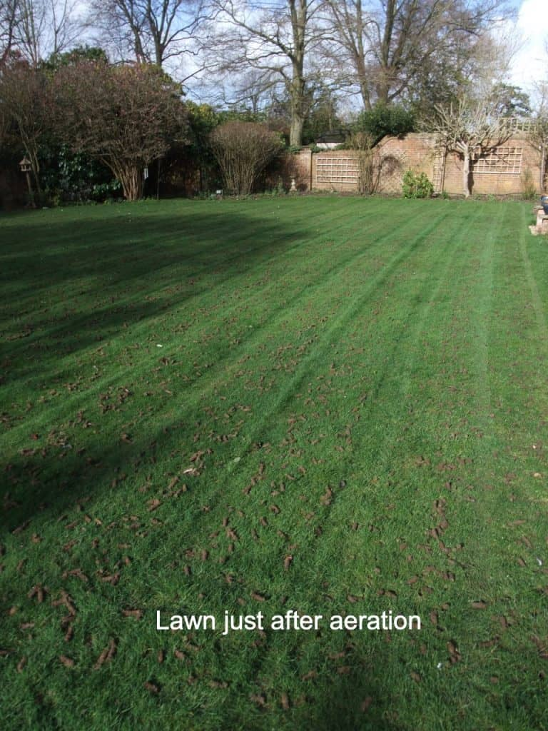 aerated lawn IN AERATION 2