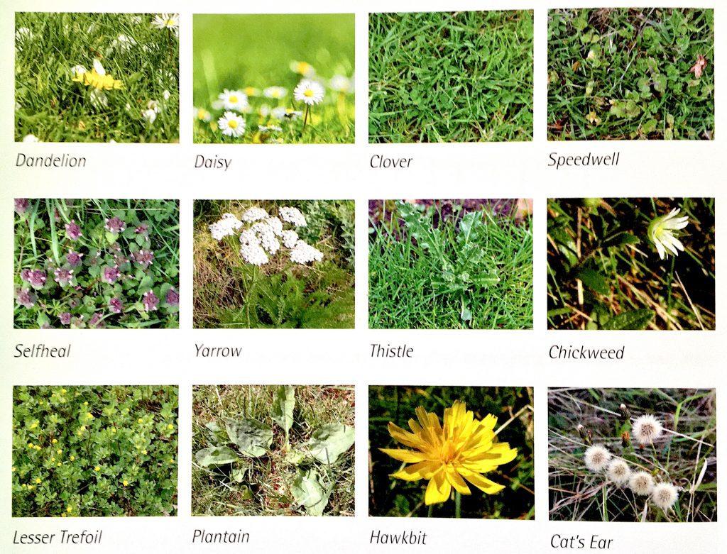 common weeds photo