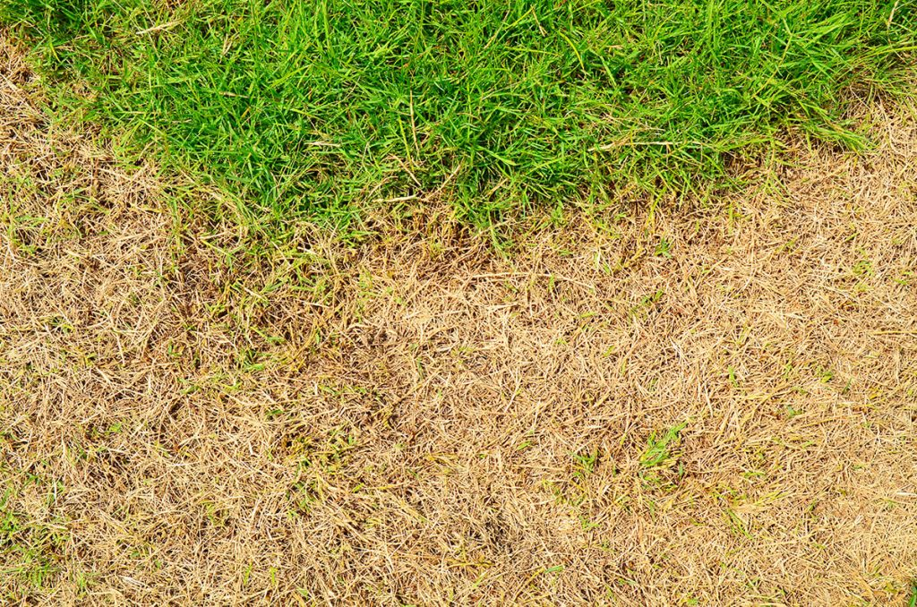 dry lawn opt 1