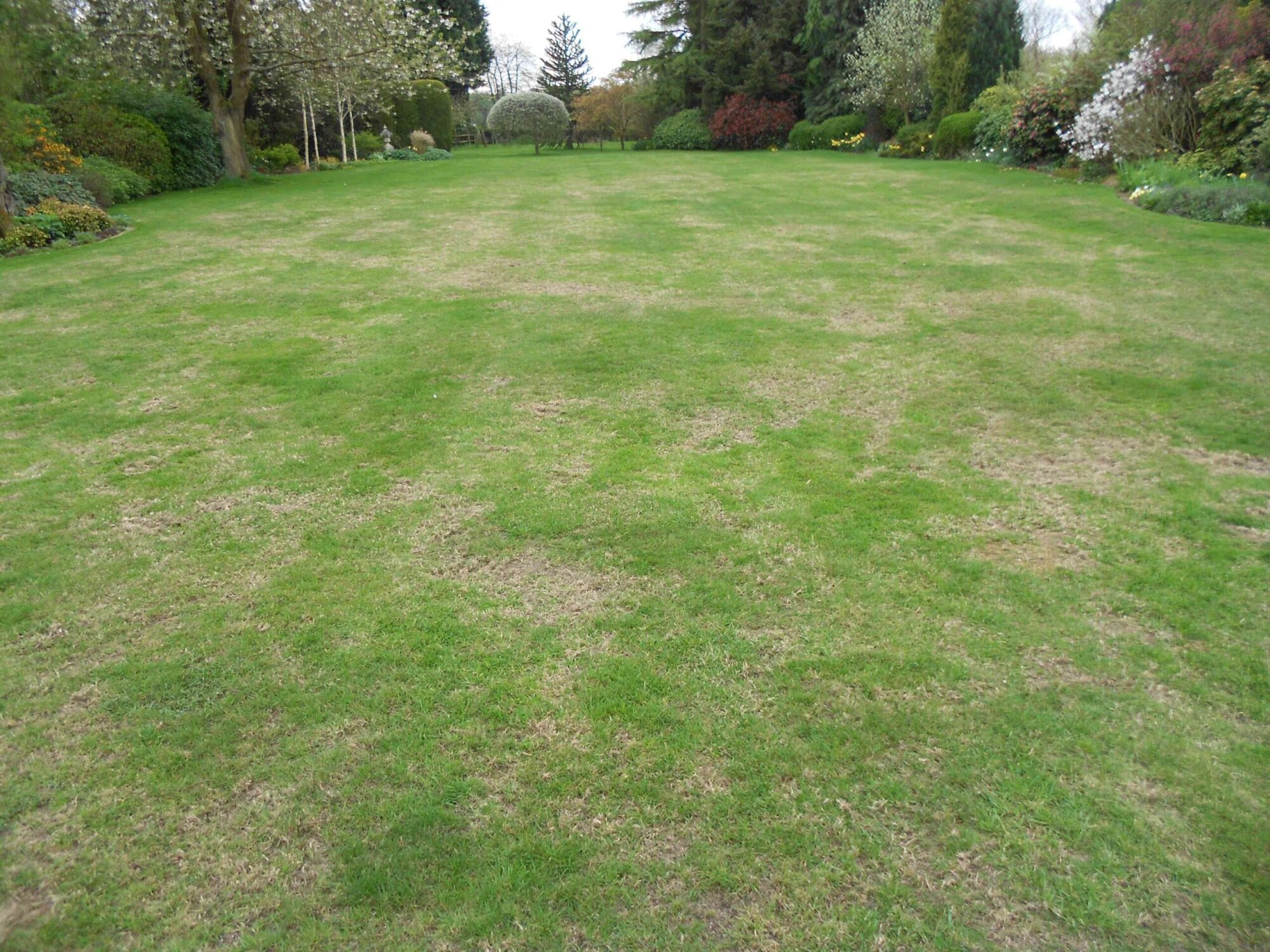 dry patch lawn WATERING scaled