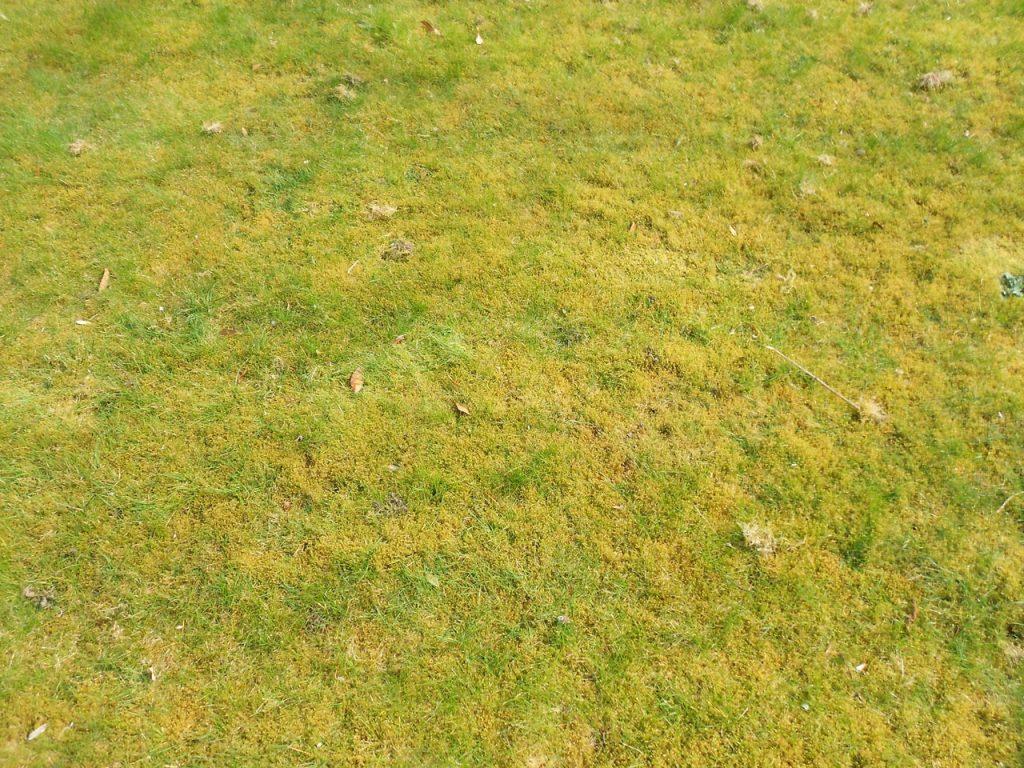 mossy lawn edited Pixlr